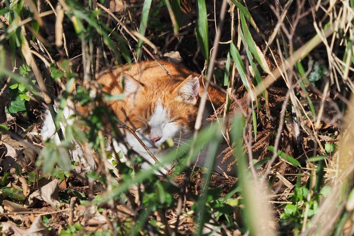 野鳥の森でうたた寝する猫_d0149245_21272866.jpg