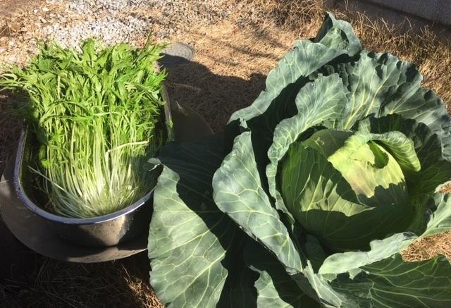 大事に育てられた野菜は甘くて_c0201749_13400570.jpg