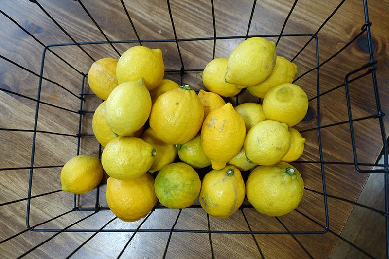 今週1/22〜のメニュー:旬のレモンのランチ&スウィーツ