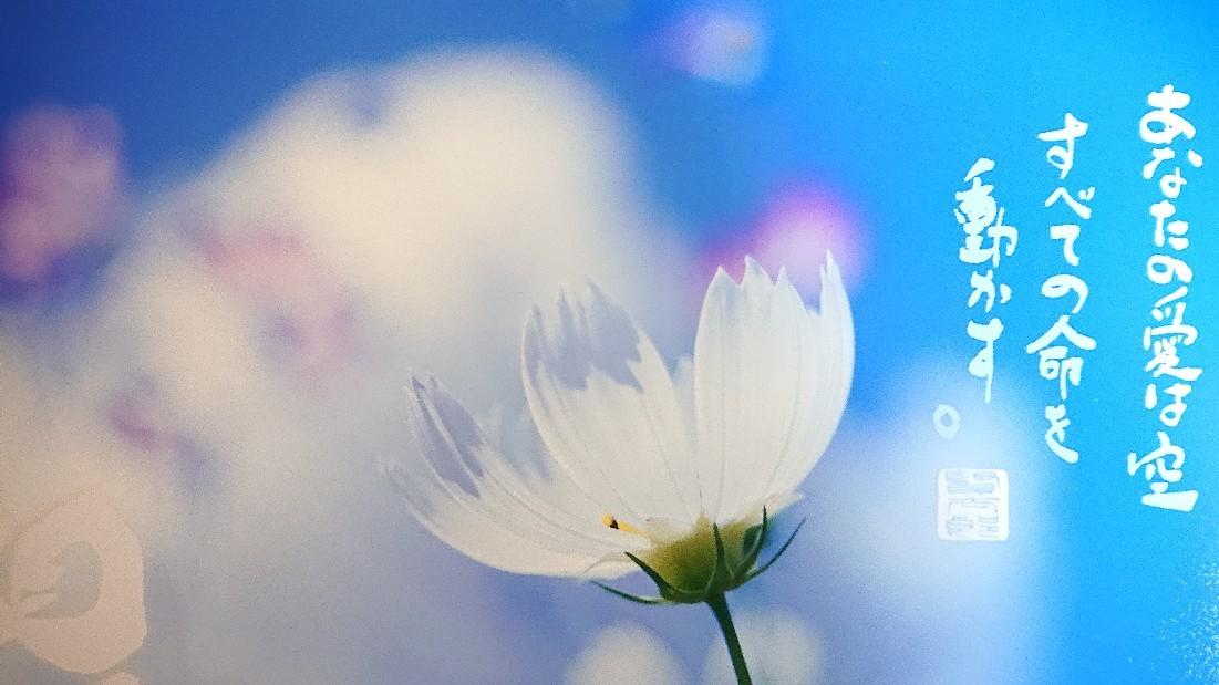 新月に想う、救いの詩***_e0290872_21215625.jpg