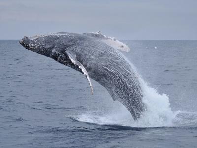「ようやくクジラに!」_b0033573_18293777.jpg