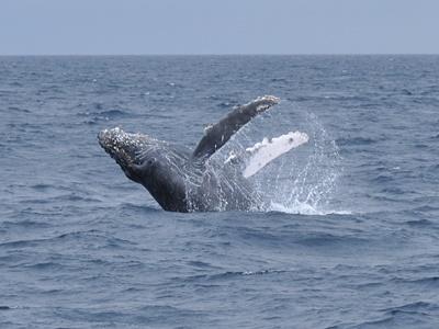 「ようやくクジラに!」_b0033573_18300088.jpg