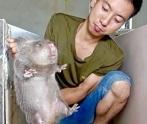 tikus bambu_a0051297_08080176.jpg