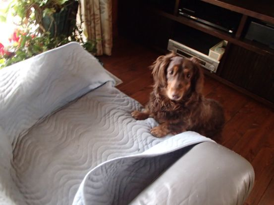 忘れない仔犬の時の記憶_f0064906_16152108.jpg