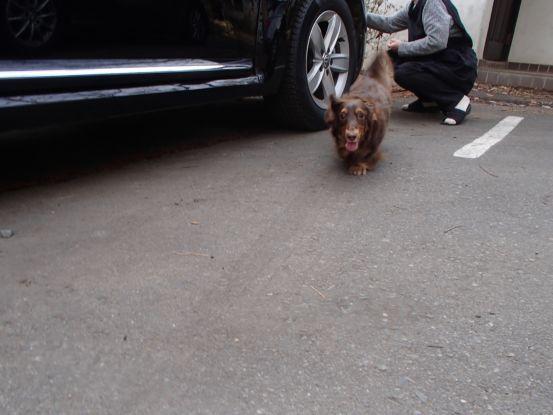 忘れない仔犬の時の記憶_f0064906_16153352.jpg
