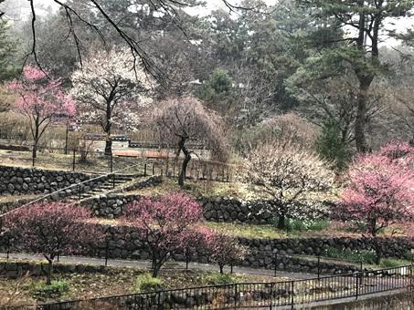 梅と桜のバスツアーで静岡へ_d0020309_10592771.jpg