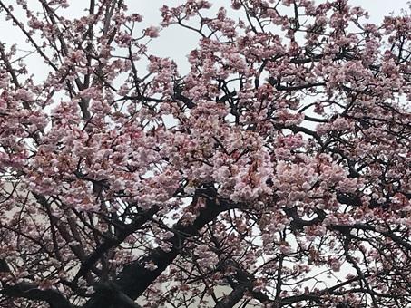 梅と桜のバスツアーで静岡へ_d0020309_11044416.jpg