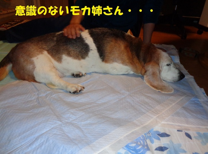 モカ姉さん、発作・・・><_f0121712_23230545.jpg
