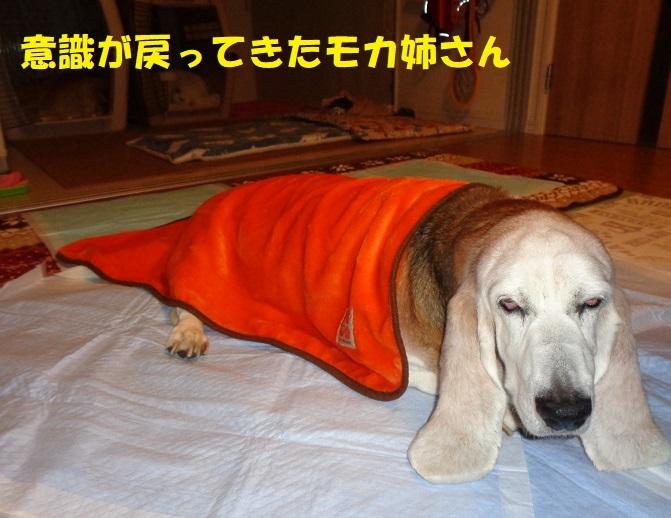 モカ姉さん、発作・・・><_f0121712_23313954.jpg