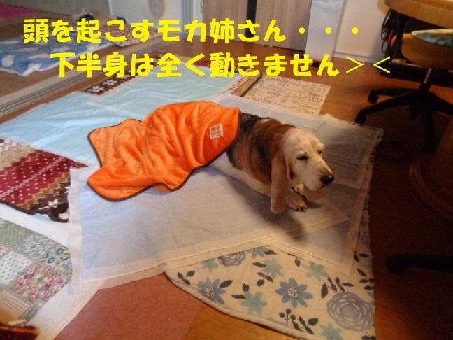 モカ姉さん、発作・・・><_f0121712_23404300.jpg