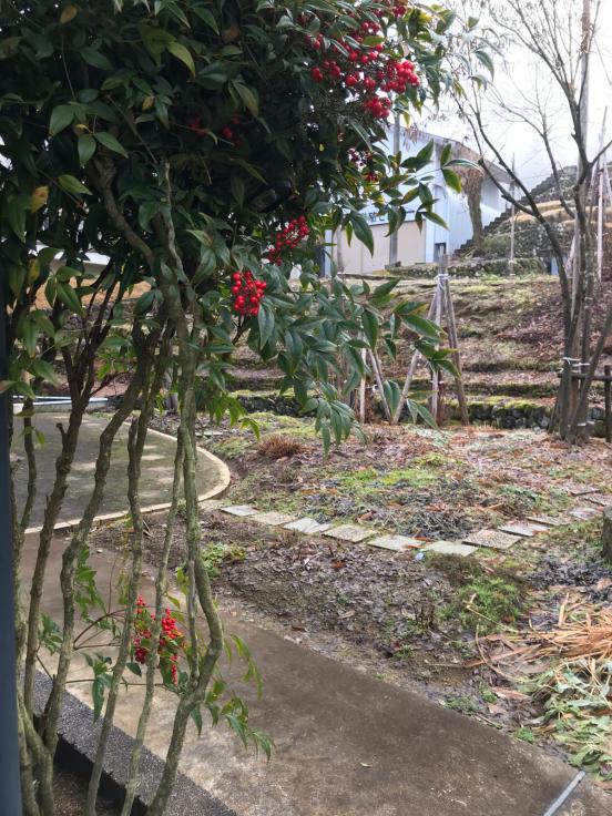 1月の庭_f0067514_09200686.jpg