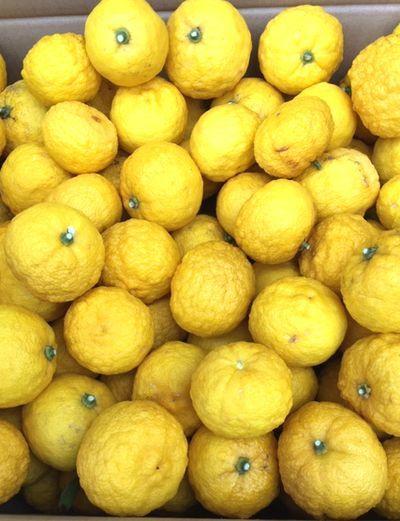 姫柚子の収穫は命がけ!_e0234016_18223180.jpg