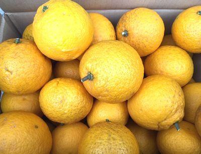 姫柚子の収穫は命がけ!_e0234016_18250338.jpg