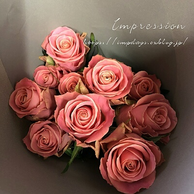 今月のバラ ピンクテディ+_a0085317_20512798.jpg