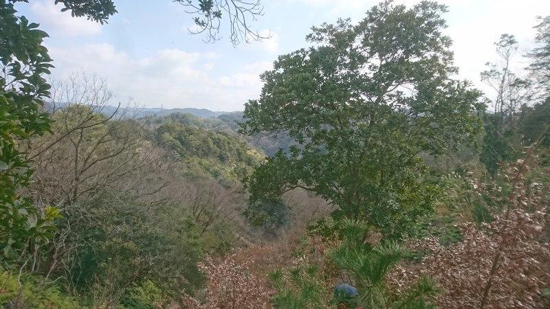 尾根の間伐とリョウブ道の階段補修_c0239329_18570679.jpg