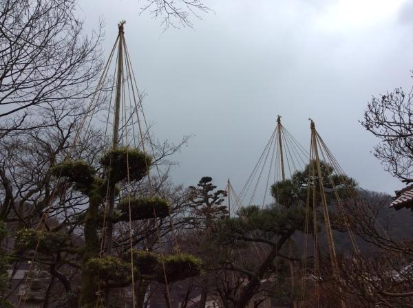 """雪を待つ「雪吊」達。岸本葉子さん発句の""""雪吊の巻""""展示中。_f0289632_06092008.jpg"""