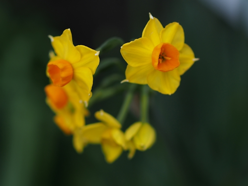 庭の花々 ☆_d0146247_22302703.jpg