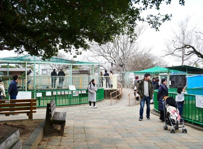 冬の和歌山城動物園  2020-01-29 00:00  _b0093754_22475033.jpg