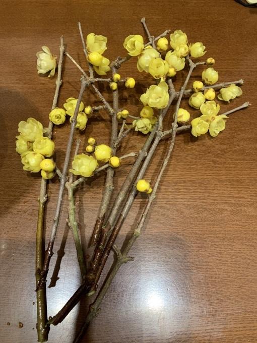 蝋梅と寒桜とおから(^^)v_b0328361_21073695.jpg
