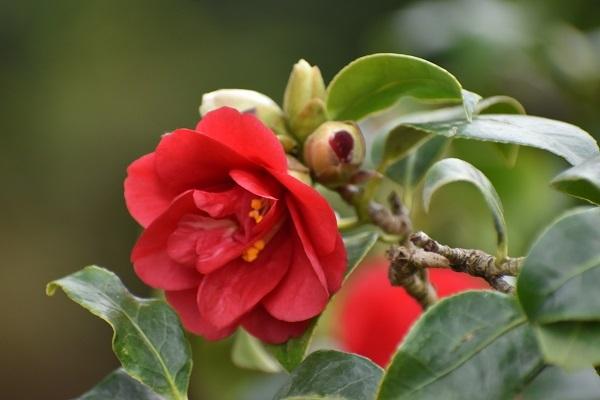 百合が原公園緑のセンターの花たちです。_f0362073_09051791.jpg