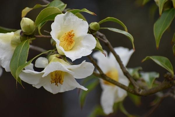 百合が原公園緑のセンターの花たちです。_f0362073_09053598.jpg