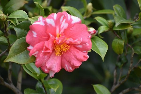 百合が原公園緑のセンターの花たちです。_f0362073_09055315.jpg