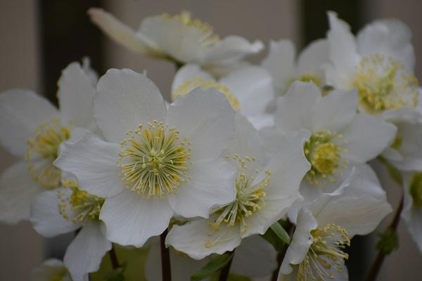 百合が原公園緑のセンターの花たちです。_f0362073_09074169.jpg