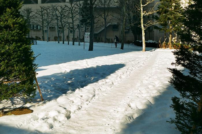 大寒前と大寒後の芝生近道の様子と中国の友人学者_c0182775_17352088.jpg
