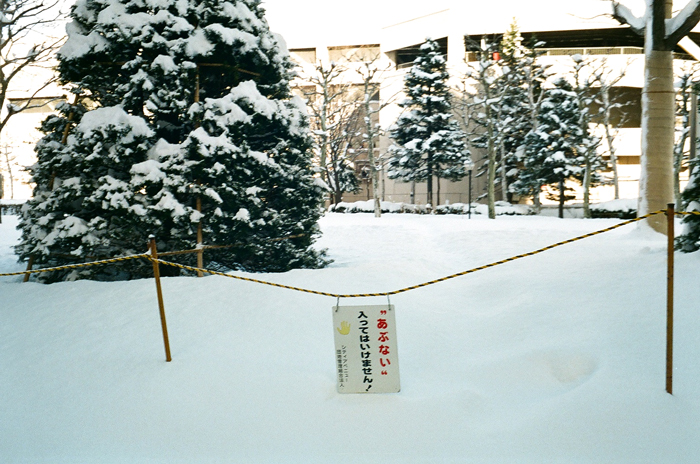 大寒前と大寒後の芝生近道の様子と中国の友人学者_c0182775_17523794.jpg