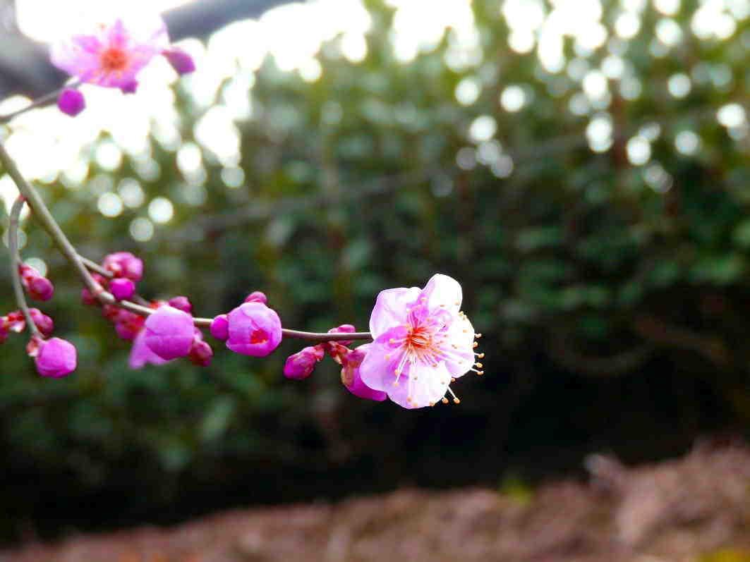 自然に聞き 茶木と対話して新しい茶園をつくる  Courage to build a tea garden in a reclaimed ancient pond_a0391480_20334617.jpg