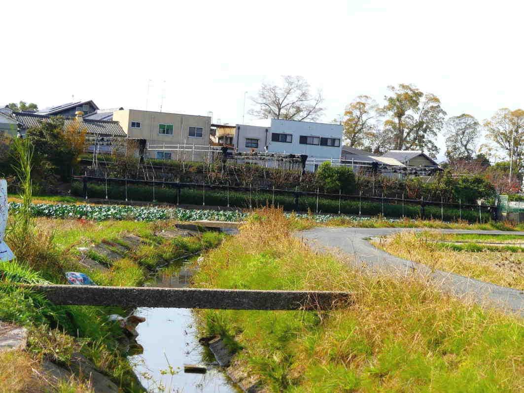 自然に聞き 茶木と対話して新しい茶園をつくる  Courage to build a tea garden in a reclaimed ancient pond_a0391480_20340032.jpg