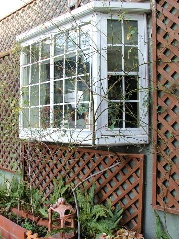 ◆出窓周りの剪定・・・フランソワジュランビル & ルイーズオーディエ_e0154682_00014731.jpg