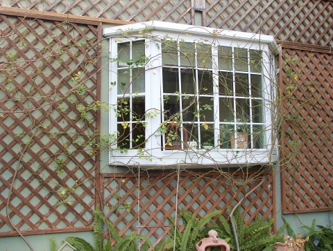 ◆出窓周りの剪定・・・フランソワジュランビル & ルイーズオーディエ_e0154682_00015744.jpg