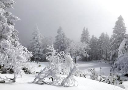 どうこうだのと......雪が降らないだけで話題は......_b0194185_17515310.jpg
