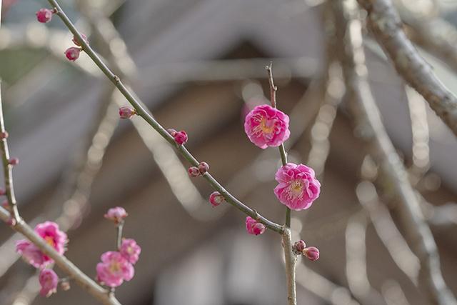 鎌倉散歩_b0145398_22400910.jpg