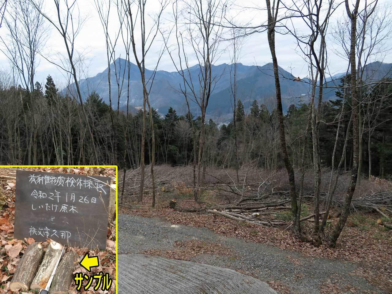 椎茸原木採取用伐採地_e0253104_18360654.jpg