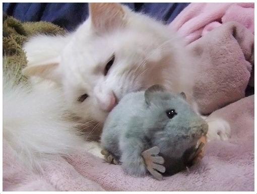 ネズミの対処は尻をかじる_a0134114_14341752.jpg