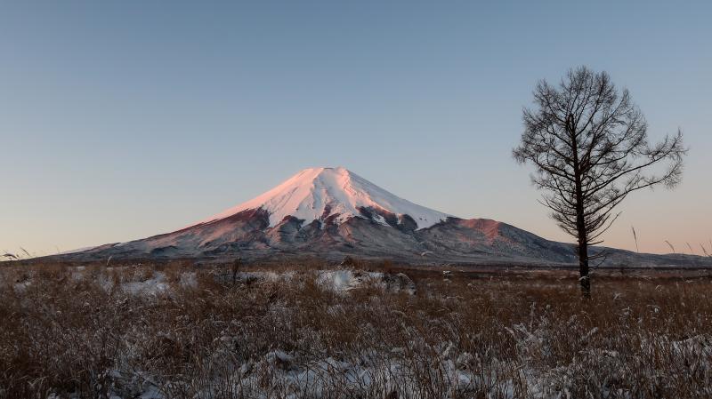 富士山周辺の野鳥・フクロウ_e0200922_23394066.jpg