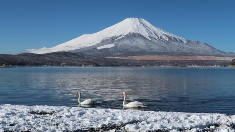 富士山周辺の野鳥・フクロウ_e0200922_23495709.jpg