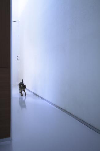 [猫的]ルウ歩き_e0090124_08564476.jpg