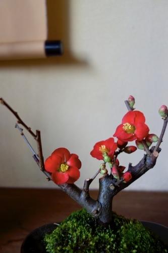 冬を楽しむ ー 木瓜のミニ盆栽_a0197730_21585683.jpeg