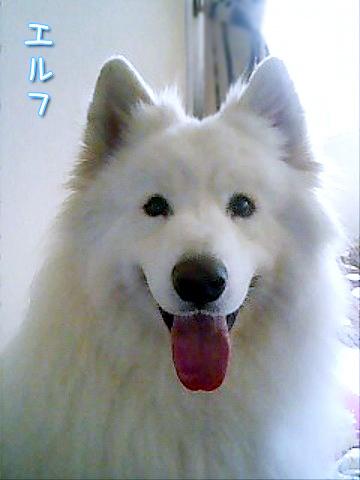 17回目の笑顔記念日_c0062832_14451925.jpg