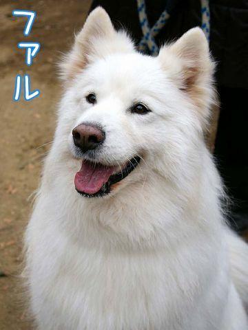 17回目の笑顔記念日_c0062832_14451994.jpg