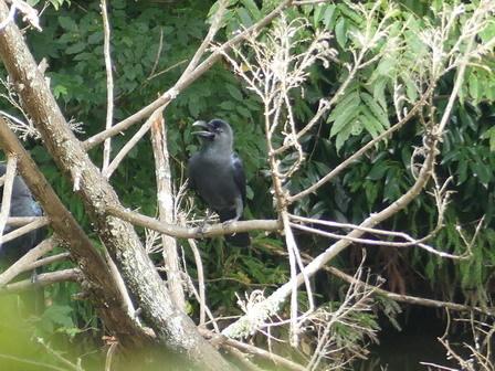 里山の鳥の観察会_a0123836_13304746.jpg