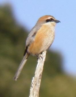 里山の鳥の観察会_a0123836_13323471.jpg