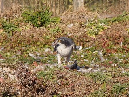 里山の鳥の観察会_a0123836_15243781.jpg