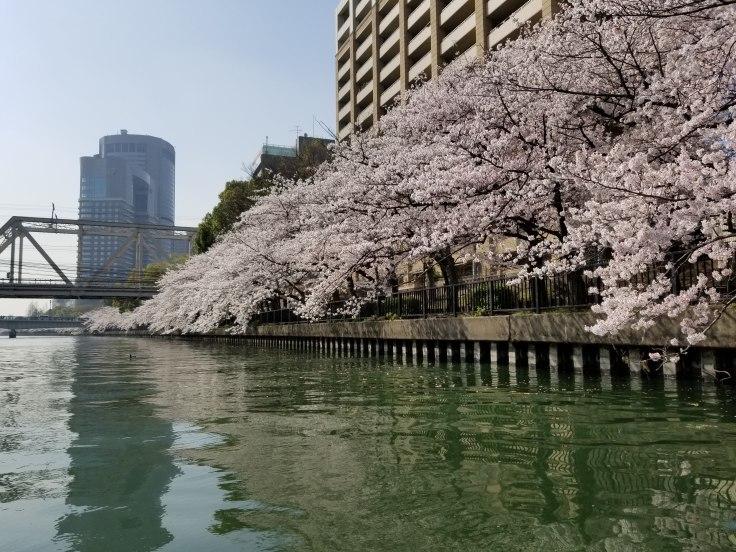 2020年かもめ桜クルーズ!_a0137142_18230452.jpg