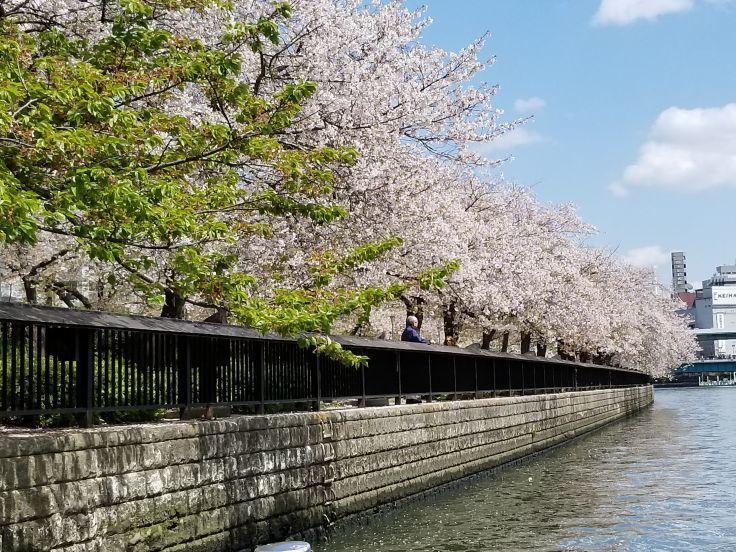 2020年かもめ桜クルーズ!_a0137142_18352077.jpg