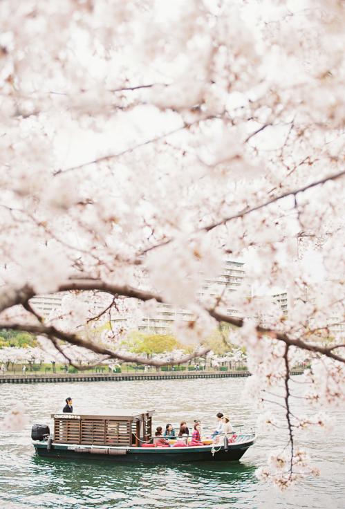 2020年かもめ桜クルーズ!_a0137142_19252855.jpg