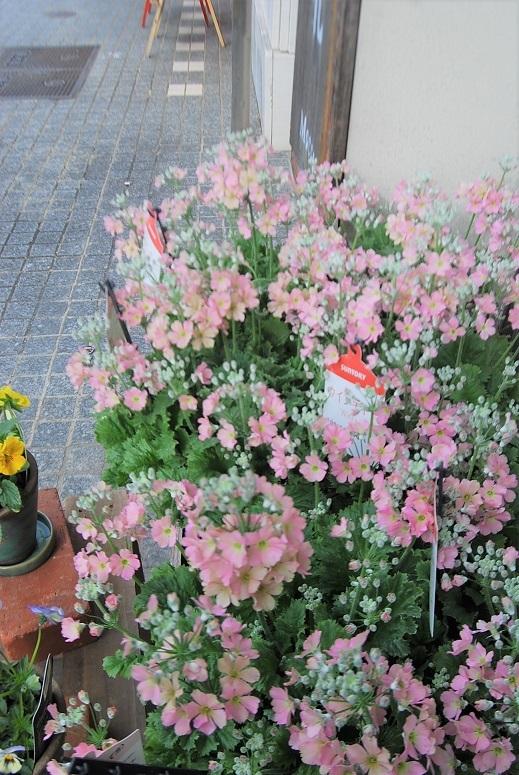 花鉢花苗の入荷。_a0201358_14264318.jpg